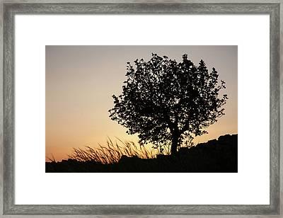 Sunset On The Hill Framed Print by Yoel Koskas