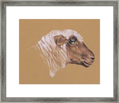 The Surly Sheep Framed Print