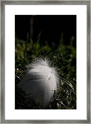 The Swans Are Back Framed Print by Odd Jeppesen