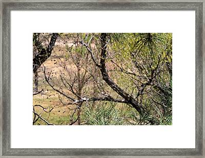 Framed Print featuring the photograph The Swarm by Donna Kennedy