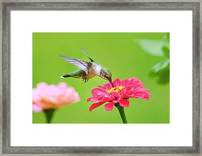 The Sweet Spot Framed Print