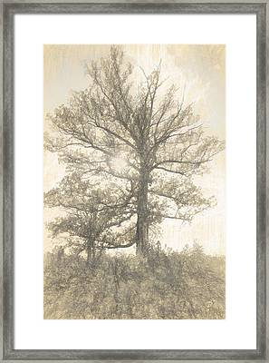 The Sycamore Framed Print by Dan Sproul