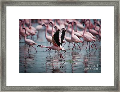 The Take Off Framed Print by Nichola Denny