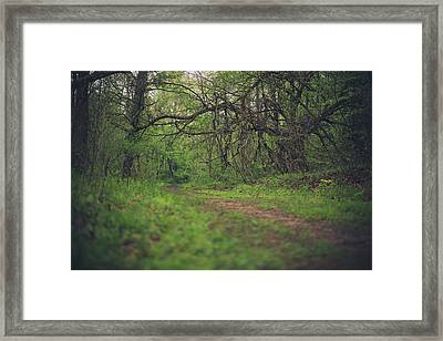 Framed Print featuring the photograph The Taking Tree by Shane Holsclaw