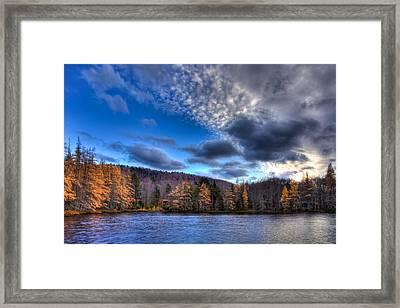The Tamaracks On Lake Kan-ac-to Framed Print by David Patterson