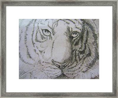 The Tamed One Framed Print by Scott Murphy