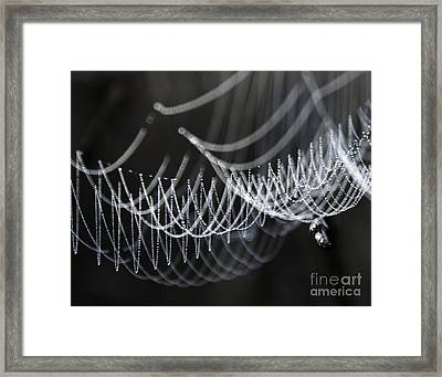 The Tangled Webs We Weave Framed Print by Jan Piller