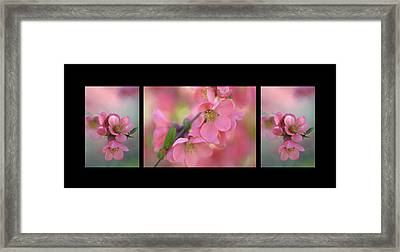 The Tender Spring Blooms. Triptych On Black Framed Print by Jenny Rainbow
