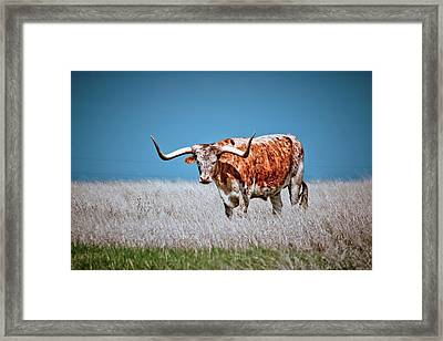 Framed Print featuring the photograph The Texas Longhorn by Linda Unger
