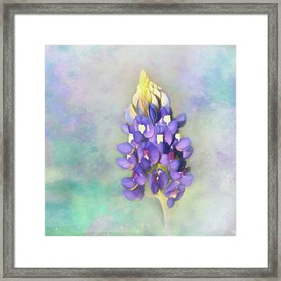Framed Print featuring the photograph The Texas State Flower The Bluebonnet by David and Carol Kelly