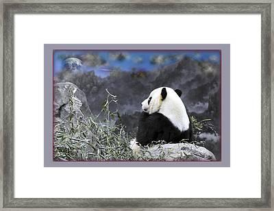 The Thinker Tai Shan In Repose Giant Panda  Framed Print by Jonathan Whichard