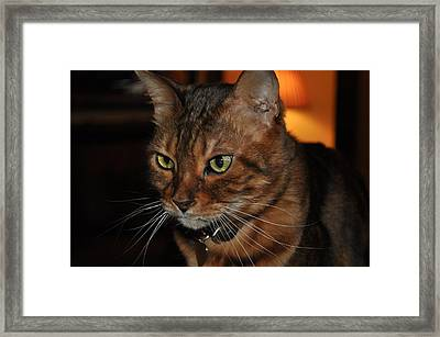 The Thinking Cat Framed Print by Jonathan Galente