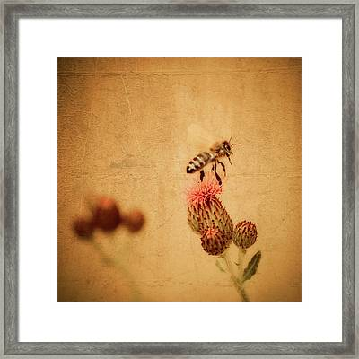 The Thistle And The Bee Framed Print