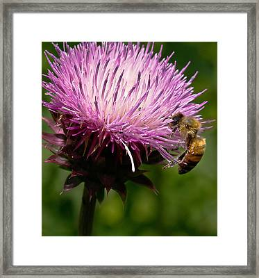 The Thistle And The Stinger Framed Print by Ron Plasencia