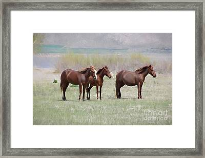 Framed Print featuring the photograph The Three Amigos by Benanne Stiens