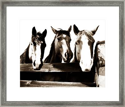The Three Amigos In Sepia Framed Print by Steve Shockley