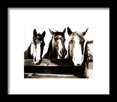Horse Ranch Framed Prints