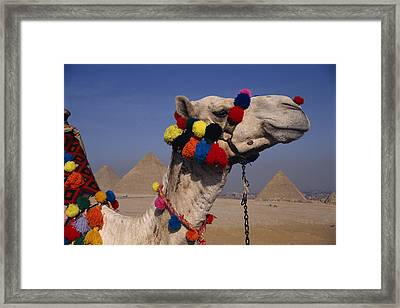 The Three Great Pyramids Of Giza Framed Print by Stephen St. John