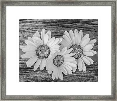 The Three Of Us Framed Print