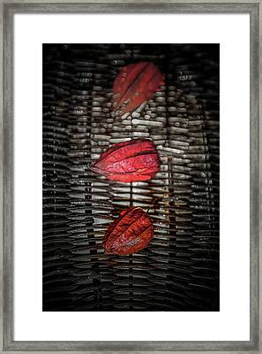 The Three Reds Framed Print