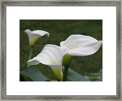 The Three Sisters Framed Print by Anne Ditmars