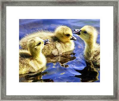 The Three Tenors Framed Print by Vicki Jauron