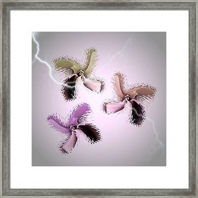 The Thunderbolt Dance Of Rose Butterflies - 1 Framed Print by Jacqueline Migell