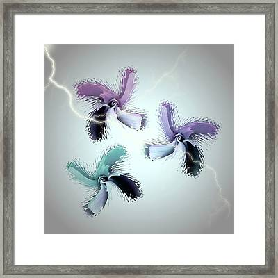 The Thunderbolt Dance Of Rose Butterflies - 3 Framed Print by Jacqueline Migell