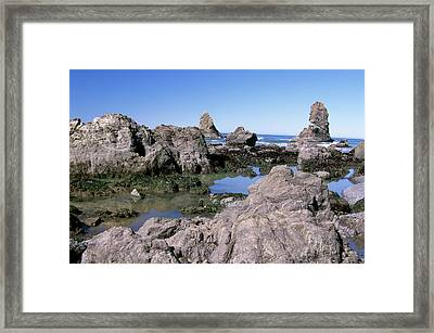 The Tidepools Of Bear Harbor Framed Print