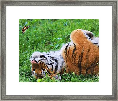 The Tiger And The Butterfly Framed Print by Dan Sproul