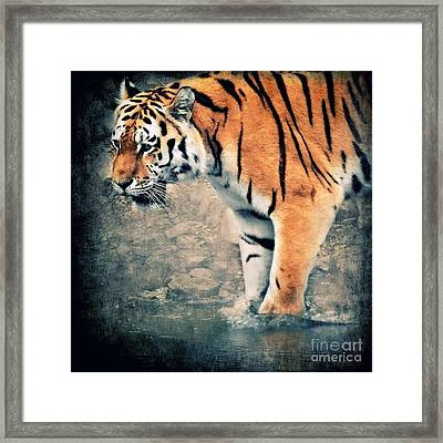 The Tiger Framed Print by Angela Doelling AD DESIGN Photo and PhotoArt