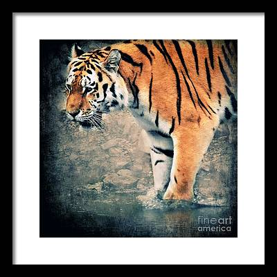 Siberian Tiger Digital Art Framed Prints