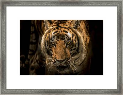 The Savage Found Me Framed Print