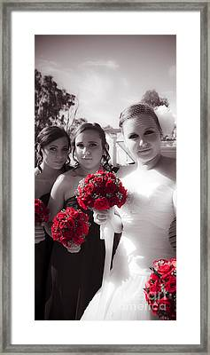 The Timeless Beauty Of Roses Framed Print by Jorgo Photography - Wall Art Gallery