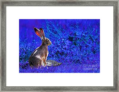 The Tortoise And The Hare . Blue Framed Print by Wingsdomain Art and Photography