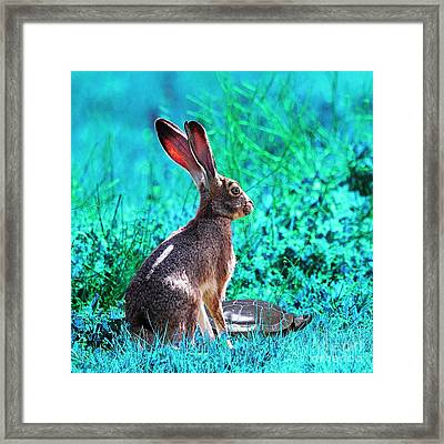 The Tortoise And The Hare . Cyan Square Framed Print by Wingsdomain Art and Photography