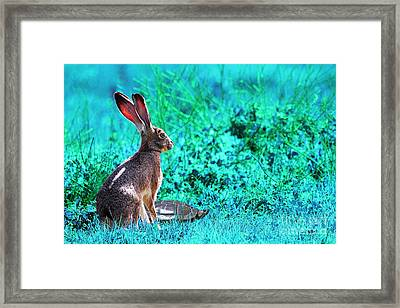 The Tortoise And The Hare . Cyan Framed Print by Wingsdomain Art and Photography