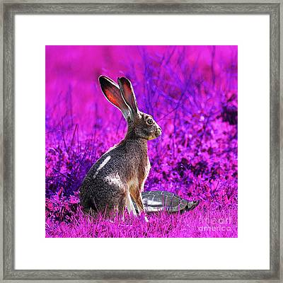 The Tortoise And The Hare . Magenta Square Framed Print by Wingsdomain Art and Photography