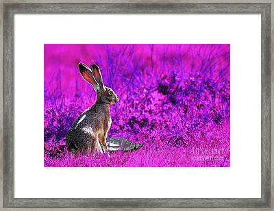 The Tortoise And The Hare . Magenta Framed Print by Wingsdomain Art and Photography