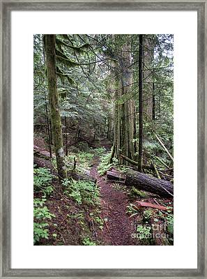 the Trail Framed Print by Rod Wiens