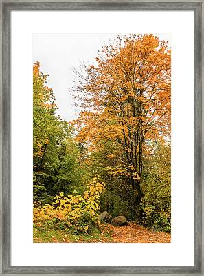 The Trail Starts Here Framed Print