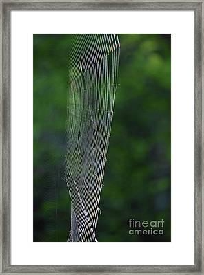 The Trap Framed Print