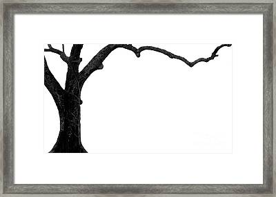 The Tree Framed Print by Amanda Barcon