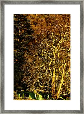 The Tree And The House Framed Print