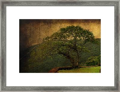 The Tree And The Range Framed Print by Valmir Ribeiro