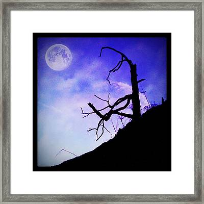 The Tree Framed Print by Contemporary Art
