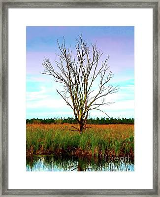 The Tree In The Marsh Framed Print by Judi Bagwell