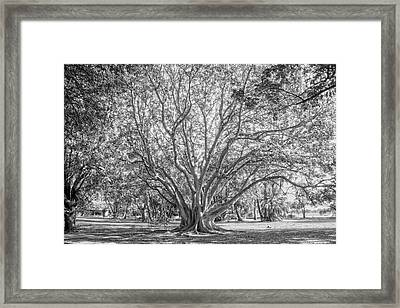 The Tree In The Middle Framed Print