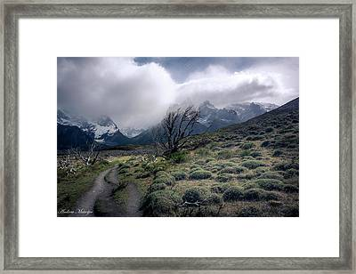 The Tree In The Wind Framed Print by Andrew Matwijec