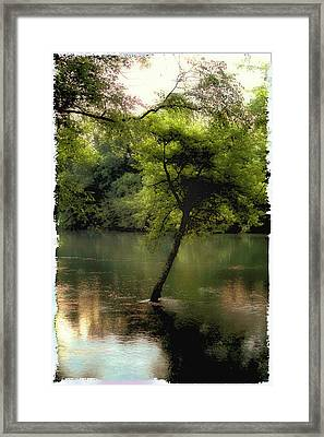 The Tree Island Framed Print by Ken Gimmi